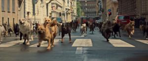 White God opening scene sees animals unleashed